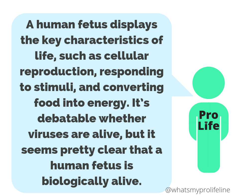 Our hero: A human fetus displays the key characteristics of life, such as cellular reproduction, responding to stimuli, and converting food into energy. It's debatable whether viruses are alive, but it seems pretty clear that a human fetus is biologically alive.