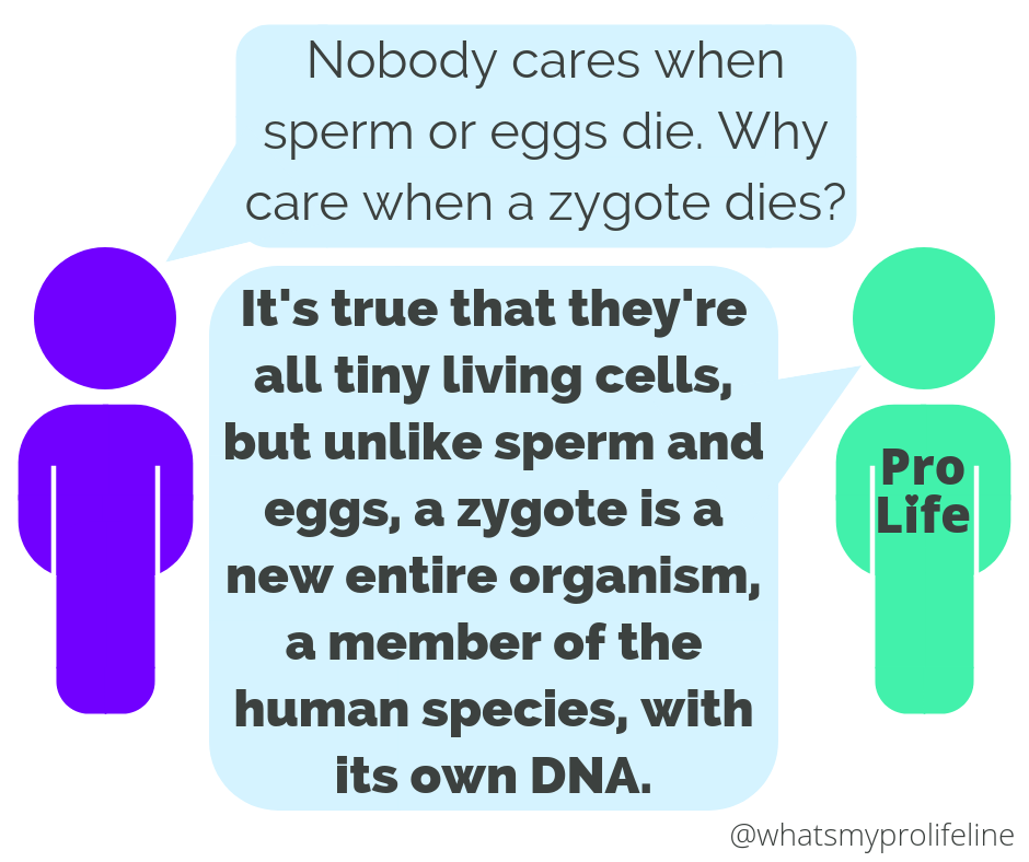 Person 1: Nobody cares when sperm or eggs die. Why care when a zygote dies? Person 2 (our hero): It's true that they're all tiny living cells, but unlike sperm and eggs, a zygote is a new entire organism, a member of the human species, with its own DNA.