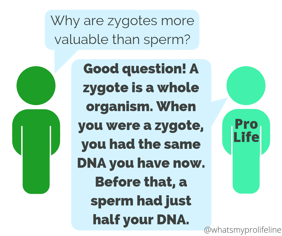 Person 1: Why are zygotes more valuable than sperm? Person 2 (our hero): Good question! A zygote is a whole organism. When you were a zygote, you had the same DNA you have now. Before that, a sperm had just half your DNA.